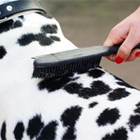 grooming keighley