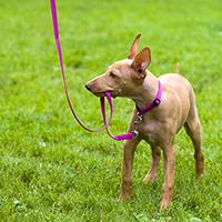 dog walker crosshills