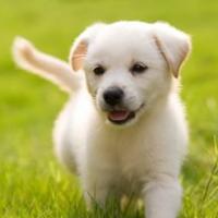 puppy visits dog walking keighley