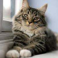 cat sitter