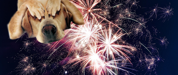 eep dogs calm on Bonfire night